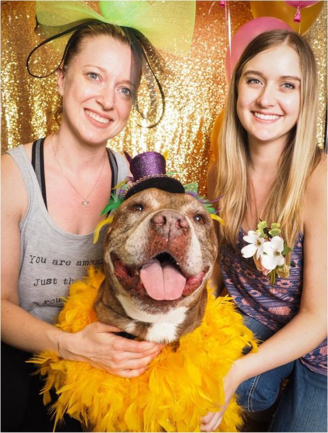 Maricopa County Animal Care and Control in Phoenix, Arizona, recently hosted a senior prom for dogs seven years and older. They were dressed in their finest to meet potential adopters!